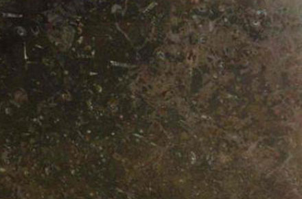 Marble-Fossil-Brown-440x290